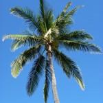 Que ramener de La Réunion ?