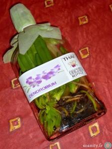 orchidée de Thaïlande