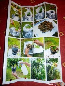 notice orchidée de Thaïlande