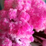 On parle de… Magic Sakura !